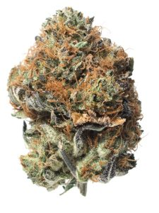 Image of cannabis strain